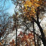 leaves sm